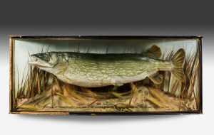 Large Cased Pike